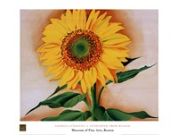 A Sunflower from Maggie, 1937 Fine-Art Print