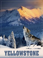 Yellowstone Wolf Fine-Art Print