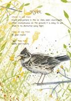 Skylark Postcard Fine-Art Print