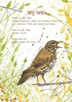 Song Thrush Postcard Fine-Art Print