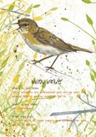 Willow Warbler Postcard Fine-Art Print