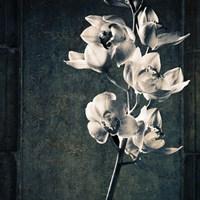 Orchids Stem Texture Fine-Art Print