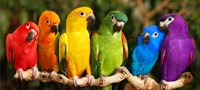 Rainbow Parrots Fine-Art Print