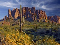 Lost Dutchman flowers Fine-Art Print