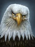 Bald Eagle Totem Fine-Art Print