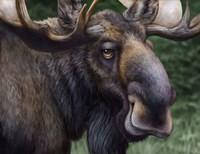 Moose Totem Fine-Art Print