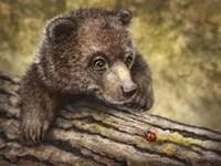 Kodiak Cub Fine-Art Print