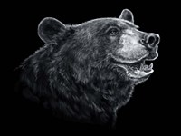 Black White Black Bear Fine-Art Print