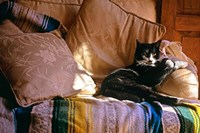 Tuxedo Cat Sitting On Sofa Fine-Art Print
