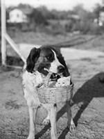 1930s Dog Holding Cat Fine-Art Print