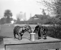 1890S Two Dachshund Puppies Fine-Art Print