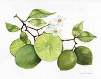 Citrus Garden VII Framed Print