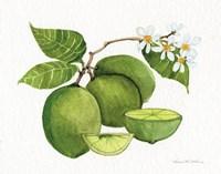 Citrus Garden IV Framed Print