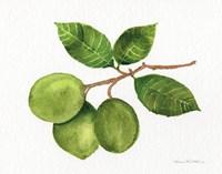 Citrus Garden II Fine-Art Print