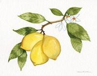 Citrus Garden I Framed Print