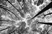 Looking Up I BW Fine-Art Print