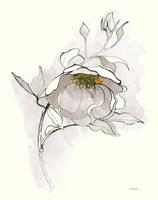 Carols Roses V Off White Fine-Art Print