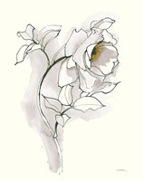 Carols Roses III Soft Gray Fine-Art Print