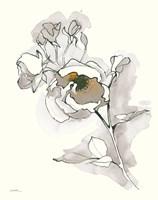 Carols Roses IV Tan Fine-Art Print