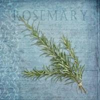 Classic Herbs Rosemary Fine-Art Print