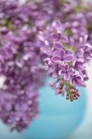 Lilacs in Blue Vase II Fine-Art Print