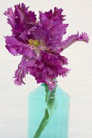 Purple Parrot Tulip Fine-Art Print
