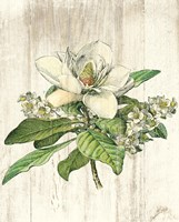 Magnolia de Printemps no Words Fine-Art Print