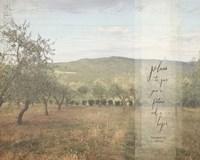 Jeremiah Olive Grove II Fine-Art Print
