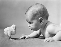 1930s Human Baby Face To Face With Baby Chick Fine-Art Print