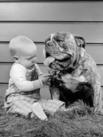 1950s 1960s Baby Sitting Playing With Bulldog Fine-Art Print