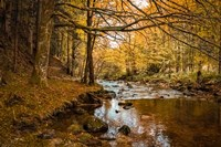 Black Forest River Fine-Art Print