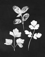 Herb Trio Framed Print