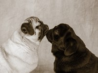 Pooch Smooch Fine-Art Print