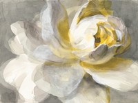 Abstract Rose Fine-Art Print