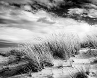 Beach Dunes Fine-Art Print