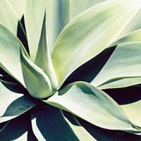 Succulent Fine-Art Print