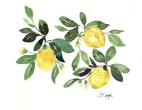 Lemons and Leaves Fine-Art Print