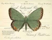 Butterfly Green Fine-Art Print
