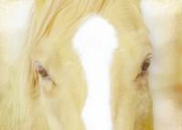 Innocent Eyes of a Horse Fine-Art Print