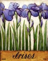 Irises Fine-Art Print