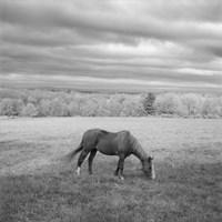 Lone Horse Fine-Art Print