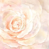 Blush Rose Closeup I Fine-Art Print