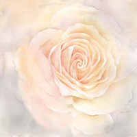 Blush Rose Closeup III Fine-Art Print