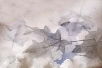 Shadow Leaves Fine-Art Print
