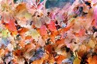 Fall's Folly Fine-Art Print