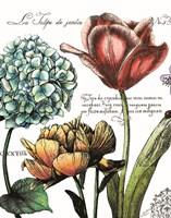 Botanical Postcard Color IV Fine-Art Print