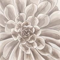 Desert Succulent II Fine-Art Print