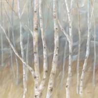 Silver Birch Square Fine-Art Print