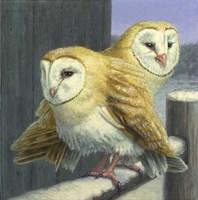 Barn Owl Couple Fine-Art Print