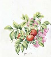 2007 Rose Hips Fine-Art Print